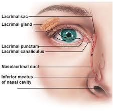 Tear Duct Surgery Mesa Az Nasolacrimal Duct Obstruction
